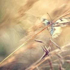 - Flying Angel -