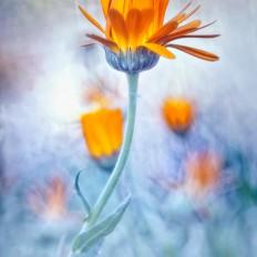 - Glowing orange -