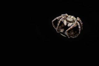 - Arachnophobia -