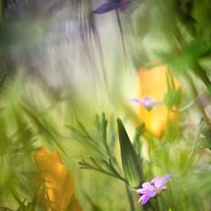 - Storchschnabel im Dschungel -