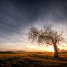 - Sonne Mond Baum -