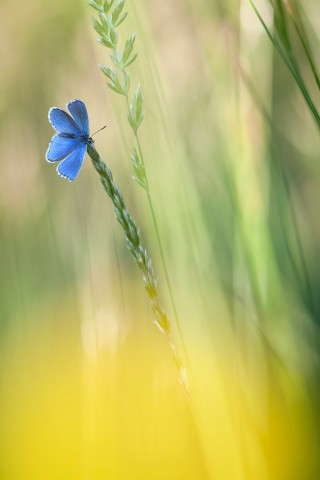 - Blaues Kleeblatt -